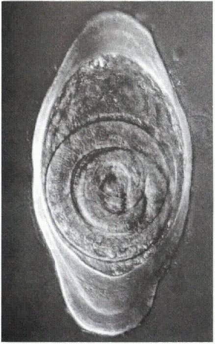 организм хозяина является для паразита средой обитания