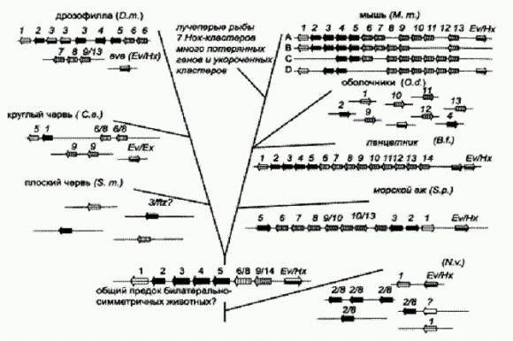 Обобщенная схема эволюции