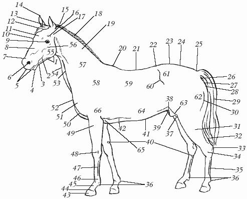 Лошади светлых мастей и со
