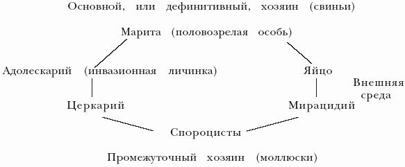 Схема 1Жизненный цикл
