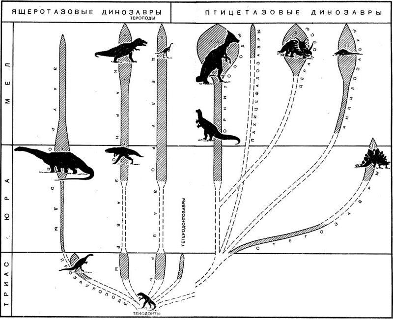 Схема эволюции динозавров