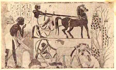 horse use across cultures from ancient Camel racing across the the ancient arabian tradition of camel they built racetracks with grandstands and a lot of the things you might see in a horse.