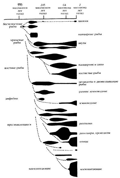 эволюция позвоночных.