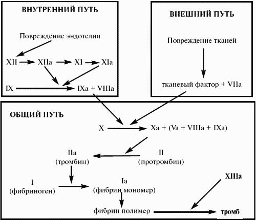 Часть I. Гематология. Общая
