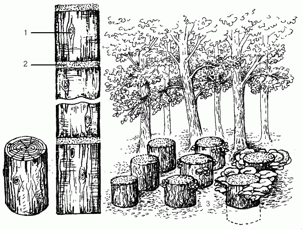Методы выращивания леса 36
