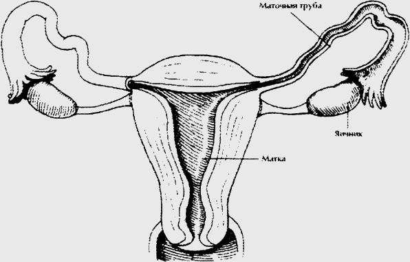 Сперма вытекает вяло и стерт оргазм